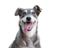 hyaluronic acid for pets
